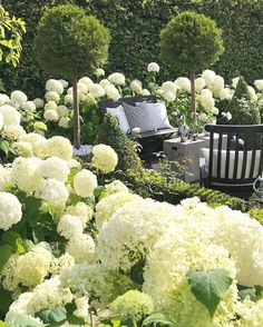 My garden is white again, unfortunately not with these beauties but with snow!! #whereisspring ??? #hydrangea #GardenDesign