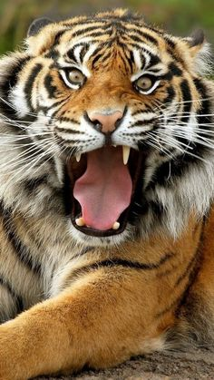 Ferocious Tiger - Best htc one wallpapers, free and easy to download