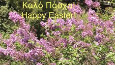 Greek herbs, shop online www.organicislands.gr Happy Easter, Greek, Herbs, Organic, Stay Safe, Islands, Shop, Happy Easter Day, Herb