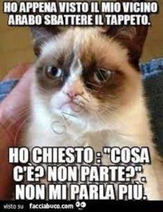 meme italiano animali divertenti che fanno ridere scherzosi da scaricare gratis per whatsapp 155011