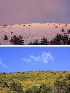 Aniversario de la Sierra del Guadarrama Subida al puerto de Navacerrada desde la vertiente madrileña derecha. Arriba, el puerto nevado y cubierto por piornos en noviembre de 2013, abajo, la misma toma, en mayo de 2014.
