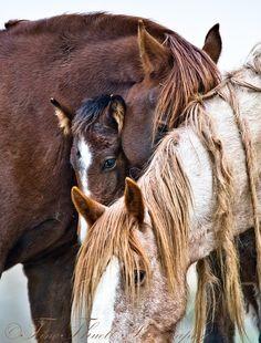 byhorse:  Return to Freedom Sanctuary, California, USA Photograph: Tina Thuell http://www.tinathuellphotography.com/