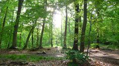 Forêt de Hez 2009   Venez découvrir les forêts de l'Oise !   © Oise Tourisme / Marie-Claude DEFRANCE Venus, Oise, Claude, Marie, Trunks, Plants, Tourism, Drift Wood, Tree Trunks