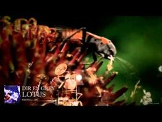 DIR EN GREY - LOTUS