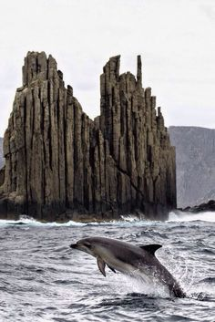 Lumba-lumba adalah makhluk laut paling cerdas, ramah dan suka menolong. Mereka memahami perintah dengan baik dan tahu cara mematuhinya....