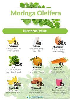 Moringa Oleifera – AdvantaVita.Com
