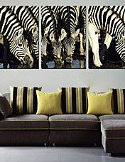 Stretched Canvas Art Animal Zebra Group Set of 3