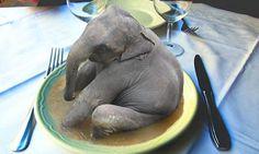 elephant soup ?