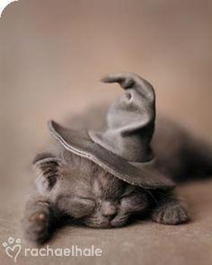 Magic cat-nap!!!