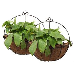 Tosnail PVC Coated Metal Wall Hanging Planter Basket with...
