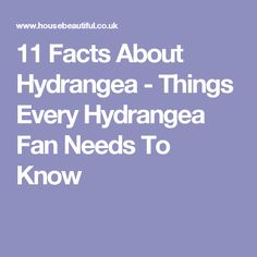 11 Facts About Hydrangea - Things Every Hydrangea Fan Needs To Know