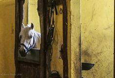 IPPODROMO-75 by Antonio Marano, via Flickr
