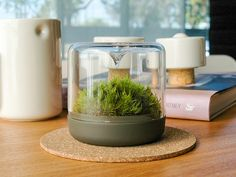 Botanica Boutique is raising funds for SANCTUARY: Bring the outside in. on Kickstarter! Sanctuary is a little mossarium that maintains the perfect moss environment. Perfect for small spaces. Mousse, Plant Species, Tiny Flowers, The Conjuring, Elegant, Indoor Garden, Decoration, Home And Living, The Outsiders