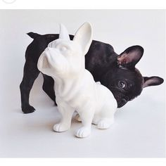 Batpig & Me Tumble It • this is so adorable  by frenchbulldogs123...