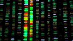 When your genome costs less than your iPhone: The beautiful, terrifying future of DNA sequencing - Feature - TechRepublic