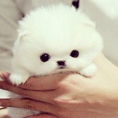 I don't like white dogs but he has an adorable face!
