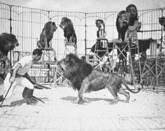 The original lion tamer: Clyde Beatty, circa 1930s [1217x970] - Imgur