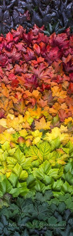 Photographer made a colour spectrum from Autumnal leaves