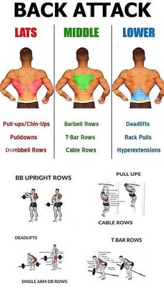 Fitness workouts back bodybuilding 68 Ideas Fitness Hacks, Fitness Workouts, Fun Workouts, At Home Workouts, Fitness Motivation, Health Fitness, Body Workouts, Back Exercises Gym, Weight Training Workouts
