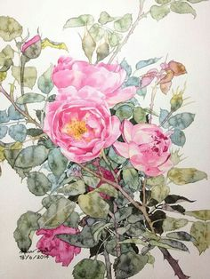 Roses, Ti Watercolor