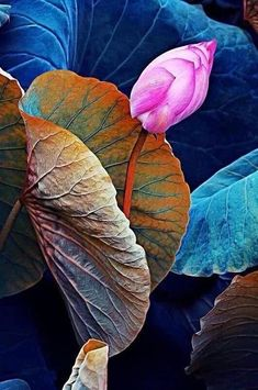 exotic flowers coloring pages Art Lotus, Lotus Kunst, Lotus Bud, Lotus Leaves, Plant Leaves, Lotus Flower, Art Floral, Exotic Flowers, Beautiful Flowers