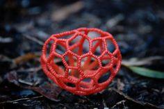 fungi-13.jpg