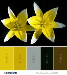 Color Palette Ideas from Flower Plant Yellow Image Find Color, Flower Images, Color Shades, Color Pallets, Colorful Flowers, Art Designs, Color Inspiration, Color Combinations, Planting Flowers