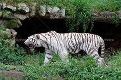 Resultado de imagem para jardim zoologico  são paulo