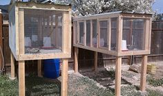 I would grow greens for them in a raised garden bed directly below and install a ramp and door for them to get down there. Quail hutches by Cowgirl Jules Chicken Pen, Chicken Cages, Chicken Feeders, Diy Chicken Coop, Chicken Houses, Quail Pen, Quail Coop, Duck Coop, Raising Quail