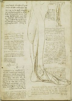 Recto: The muscles and tendons of the sole of the foot. Verso: The muscles of the lower leg | Royal Collection Trust