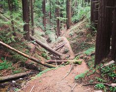 It was one of those runs that trail runners dream about. One of the dragons we chase. My pace quickened by the stimulating environs and my heart pounding from 1100' of vertical gain my consciousness tucked neatly into the pocket. I was free. No influence. No judgement. My thoughts passed as the trees at the trailside - each to be considered without expecting anything of them or them of me. Focusing on nothing but inhaling and exhaling. #RunningOnReefer #CannabisKeepsMeActive…