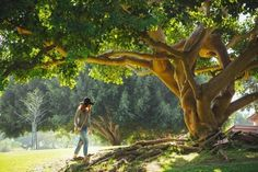 Young woman wearing hat walking towards old tree in summer