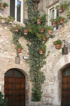 Ivy in Assisi Italy