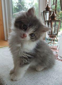 Aww u look so confused little guy