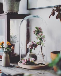 Trapped a little bit of spring in here for good measure  happy Sunday feels x