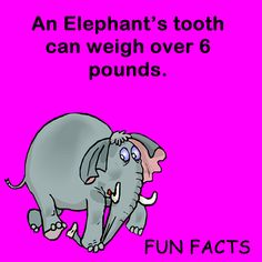 An elephant tooth can weigh over 6 pounds! Visit A Kids Place Dentistry in Salt…
