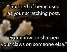 Warrior Cat Quotes