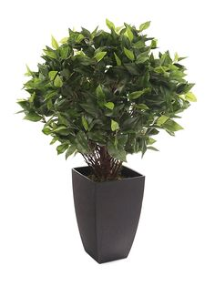Closer to Nature Artificial 2ft Danielle Weeping Fig Tree - Artificial Silk Plant and Tree Range *** Be sure to check out this awesome product. (This is an affiliate link) #UsefulHomeDecor