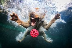 Photographer Seth Casteel's amazing images of dogs playing underwater.
