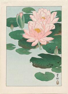 Ohara Koson Water Lilies 1920 Japanese Woodblock Print Vintage Historical Japanese Art Art Print by Tokugawa - X-Small