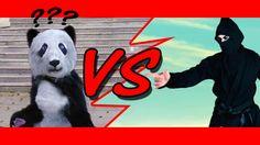 Ninja Versus Kung Fu Panda Kung Fu Panda, Ninja, Indie Movies, Ninjas, Independent Films