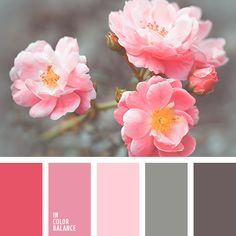 Colour pallette, color theory, gray color schemes, pink brown, pink a Colour Pallette, Colour Schemes, Color Patterns, Color Combos, Color Balance, Color Harmony, Balance Design, Design Seeds, Color Swatches