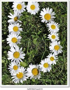 Free art print of Letter of daisies. Get up to 10 Gallery-Quality Art Prints for Free. Daisy Art, Daisy Love, Daisy Wallpaper, Cute Wallpaper Backgrounds, Wallpaper Pictures, Flower Farmer, Flower Alphabet, Free Art Prints, Beautiful Nature Wallpaper