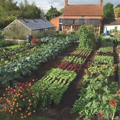 50+ Beautifuly Colorful Vegetable Garden Design Ideas #garden #garden #gardendesign #gardendesignideas Small Gardens, Outdoor Gardens, Colorful Vegetables, Growing Vegetables, Gardening Vegetables, Design Jardin, Permaculture Design, Permaculture Garden, Vegetable Garden Design
