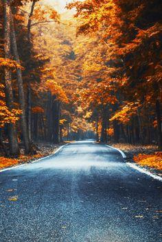 Autumn roads.