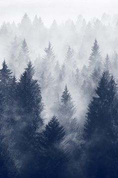 love snow photography winter cold tree tumblr sad perfect vintage landscape trees photograph alone indie night dark blue mountains nature forest mist fade Woods mystery Wood fog Winter is Coming pines wintrer