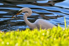 A Photo in the life of: Fishing The Life, Wildlife, Fishing, Photography, Animals, Animales, Animaux, Photograph, Fotografie