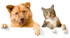 Dog and Cat above white banner Stock Photos