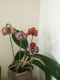 Orchideen aus Nespresso Kapseln http://youtu.be/NLGIxPBu2k0