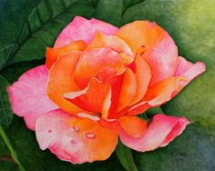 Ruffled Rose • Watercolor on Paper • 14x11  •  ©Pam Harp Watercolors  •  Reference Photo by Susan Wallick. Watercolor Rose, Watercolor Artwork, Harp, Watercolors, Photo Galleries, Gallery, Paper, Flowers, Plants